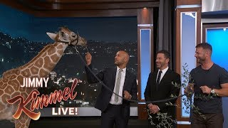 Adorable Baby Animals with Dave Salmoni & Keegan-Michael Key