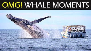 Giant Whale Jumps Out Of Nowhere Up Close - TOP 5 WHALE JUMPS