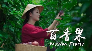 「One Fruit for a Table」Herbalist of Fruits——Passion Fruits