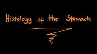Histology of the Stomach: Pharmacology Lecture