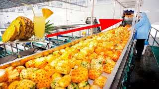 Pineapple Juice Production Process Inside the Factory, The Best Modern Food Processing Machines