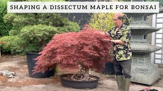 Shaping a Dissectum Maple for Bonsai
