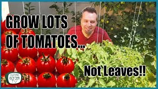 Grow Lots of Tomatoes... Not Leaves // Complete Growing Guide