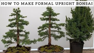 Making Formal Upright Bonsai from Alberta Spruce