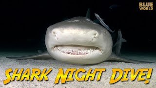 Night Diving with Sharks! | JONATHAN BIRD'S BLUE WORLD