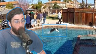 HasanAbi reacts to Daily Dose Of Internet - Dog Amazes People By Running Over Pool