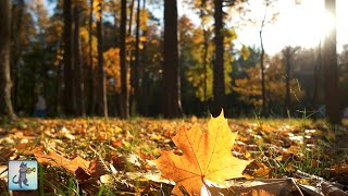 3 HOURS of Beautiful Autumn Colours ~ Amazing Nature Scenery & The Best Relax Music