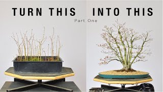 Turn Japanese Maple Seedlings into a Clump Style Bonsai, Part 1 | Bonsai-U