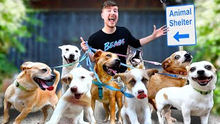 I Adopted EVERY Dog In A Dog Shelter
