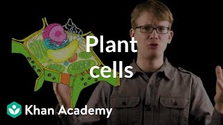 Plant cells | Crash Course biology| Khan Academy