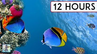 CALMING CORAL REEF AQUARIUM COLLECTION • 12 HOURS • BEST RELAX MUSIC • SLEEP MUSIC • 1080p