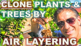 CLONE Your Favorite Plants & Trees | AIR LAYERING | Simple Propagation Techniques |  BEFORE & AFTER