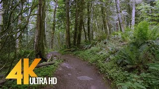 4K Virtual Forest Walk - 5 Hours Walking in the Woods, Grand Ridge Trail, Issaquah, WA