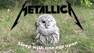 Owl. Sleep with one eye open. (Metallica: Enter Sandman)